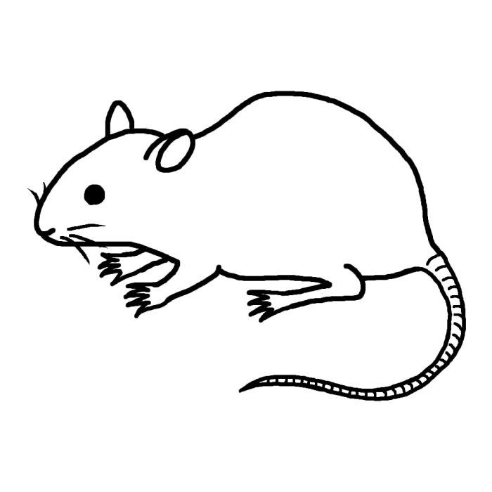 ネズミの画像 p1_33