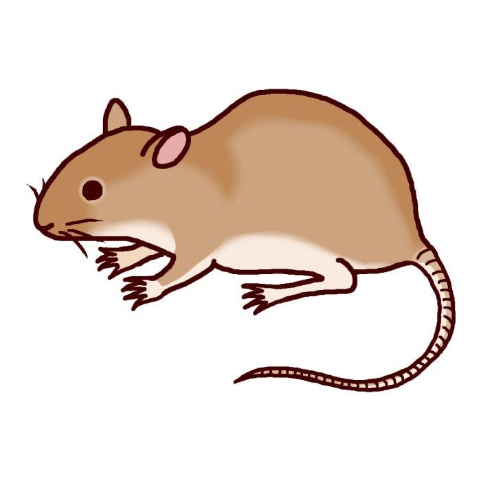 圖片搜尋: 鼠?@ : 十二支の絵 : すべての講義