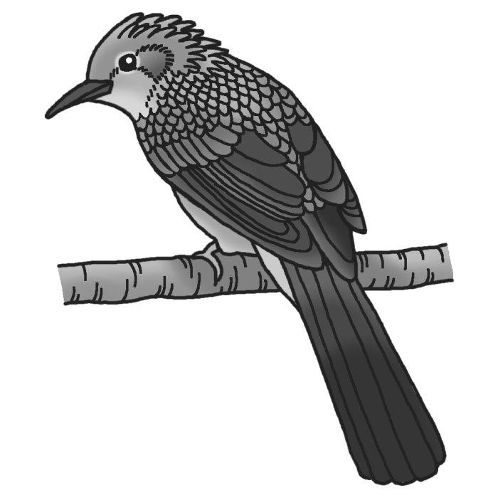 ヒヨドリの画像 p1_20