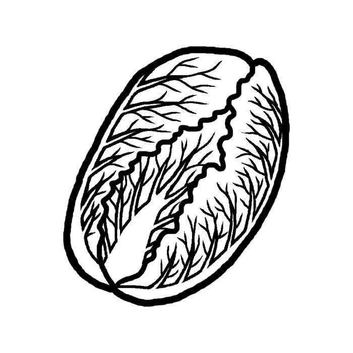白菜(白黒)/野菜/食べ物/無料イラスト素材